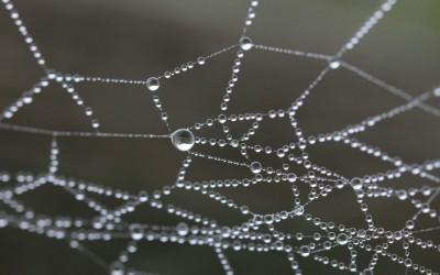 Ein Netz für Agilität